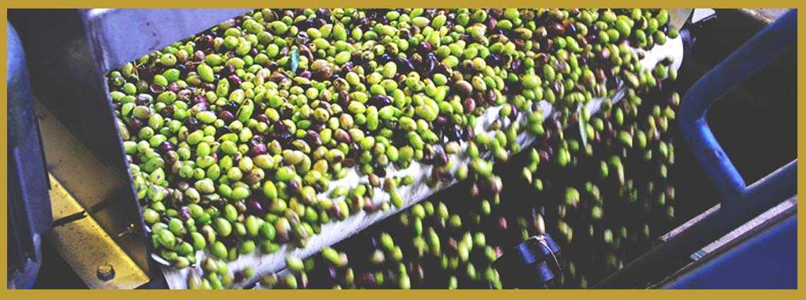 fábrica-de-aceite-oliva