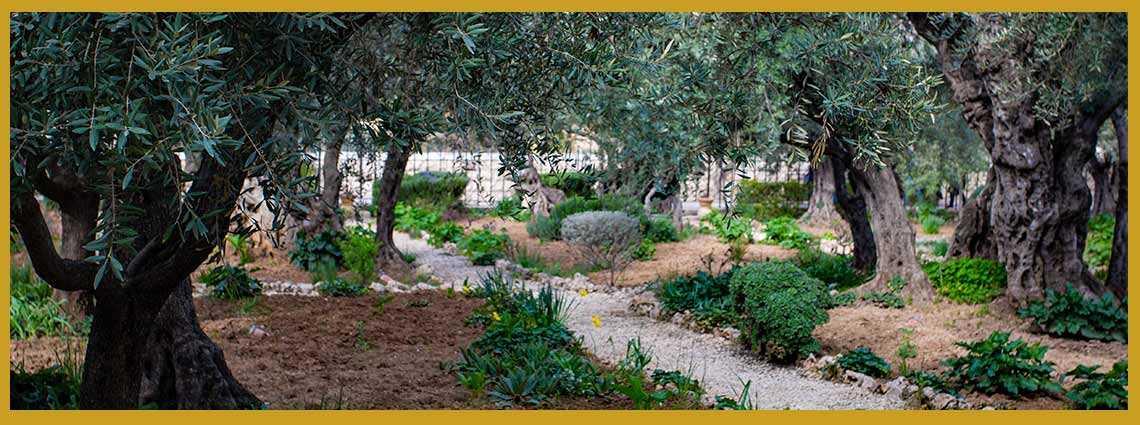 cómo hacer aceite de oliva