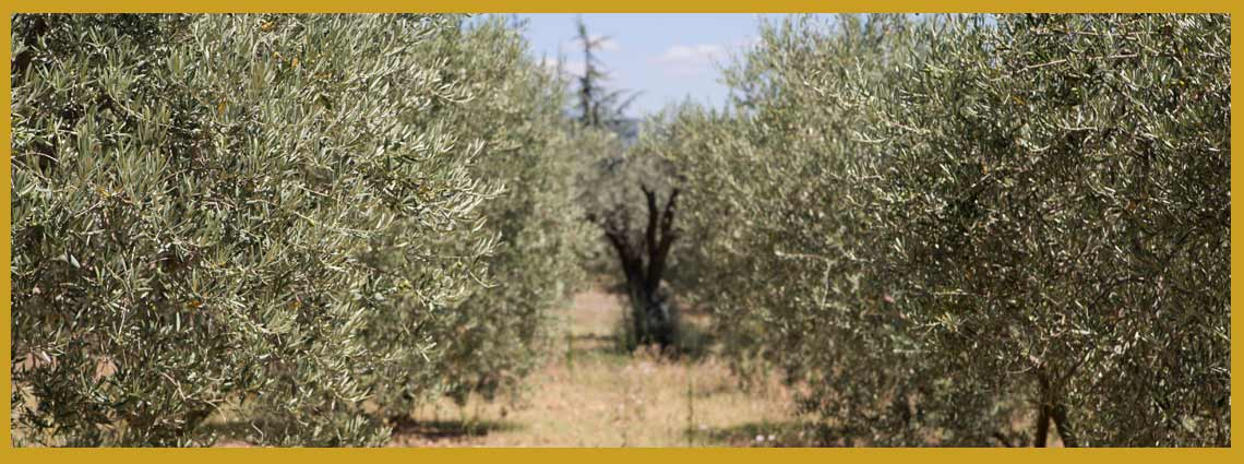 Tipo de aceite de oliva
